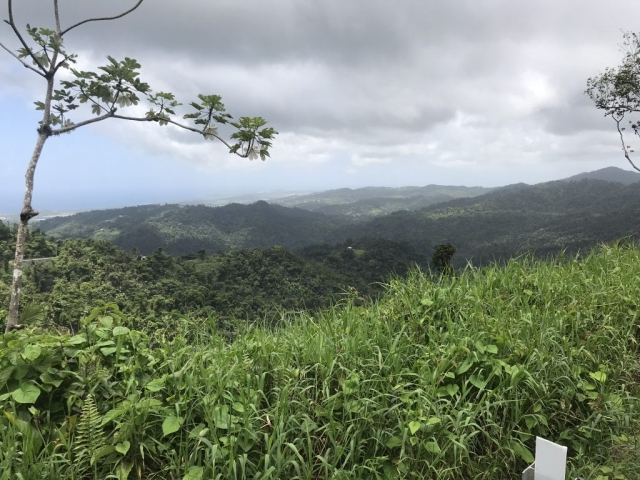 A view from El Yunque National Forest